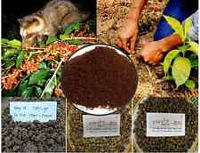 Kopi Luwak Sumatera Authentic Sumatran Wild Civet Coffee