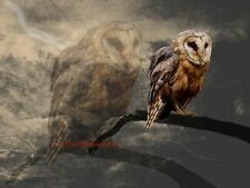 An Echo - Surreal Barn Owl Matted Signed Original Picture Art Print A662