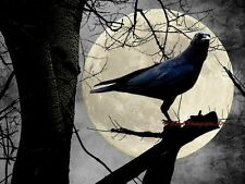 Dramatic Crow Moon Sky Tree Gray Black Home Decor Matted Picture Art Print A669