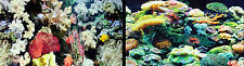 """Aquarium Fish Tank Background by the foot 12""""Height Two-sided WORLDWIDE SHIPPING"""