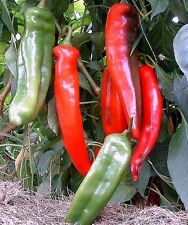 Rare Giant Red Chili Pepper NUMEX BIG JIM 10 or 20 Heirloom Vegetable Seeds