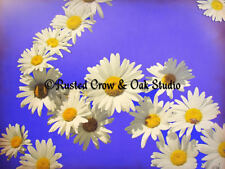 Daisy Chain White flower Blue Purple Sky Floral Home Decor Matted Picture A198