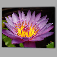 Purple Water lily Flower Canvas Wall Art Picture Print Framed Large Gift For Her