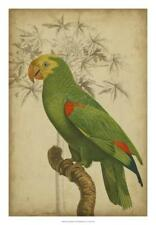 Parrot and Palm III Giclee Print