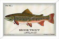 Trout,Brook,Brown,Cutthroat,Rainbow,Lake,fish,fishing,angler,steam,Fishery