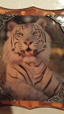WHITE TIGER SHELLAC ON POLISHED WOOD READY TO DISPLAY