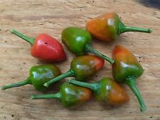 Dundicut Chili Peppers Seeds - Popular in Pakistani & Indian cooking~Very Rare