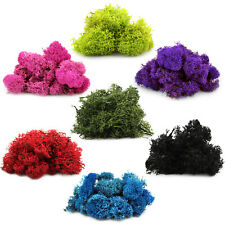 Preserved Reindeer Moss for Terrariums, Fairy Gardens, Arts & Crafts - 9 Colors
