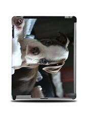 BOSTON TERRIER DOG 2 HARD CASE COVER FOR APPLE IPAD 2 / 3 / 4