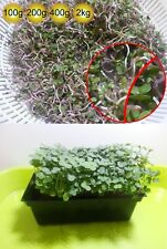 Kale Red Russian Sprout seeds  ( Sprouts Vegetable, Sprouting seeds )