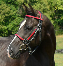 * DRAFT HORSE SIZE * Any 2 Color HALTER BRIDLE HEADSTALL Beta Biothane Trail