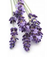 Lavender Essential Oil from Modern Gaia - Buy 3, Get 1 - Free Shipping