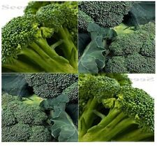 ORGANIC SPROUTING CALABRESE Broccoli seeds ~ FRESH GREEN - Popular Variety ~ 60
