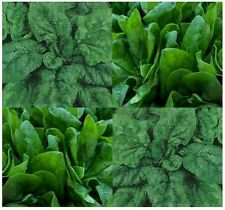 ORGANIC BLOOMSDALE Spinach seed - Favorite among gardeners ~ glossy and dark 45