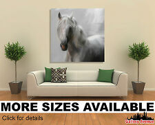 Wall Art Canvas Picture Print - Andalusian Horse 1.1