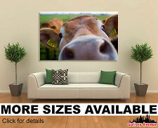 Wall Art Canvas Picture Print - Funny Cow Close-up 3.2