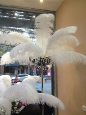 New! Pretty 6-20 inches / 15-50cm natural ostrich feathers wedding ceremony hot
