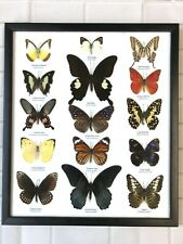 15 FRAMED BUTTERFLIES REAL SPECIMENS BUTTERFLY PICTURE FRAME TAXIDERMY INSECT