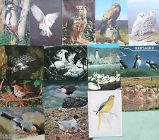 Postcards - BIRDS - OWLS - EAGLE - WOODPECKER - FLAMINGO - DIPPER - PUFFIN