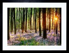 BLUEBELL WOOD SUNRISE TREES PHOTO ART PRINT FRAME MOUNT F12X203