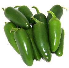 Early Jalapeno Pepper Seeds, (Hot Chile), Capsicum annuum
