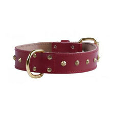 Bull Terrier Leather Collar Studded - Accessories  Dog Collars Leather
