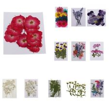Variety of Real Pressed Dried Flowers for DIY Scrapbooking Art Craft Decorations