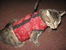 Kitty Holster Cat Harness Several Sizes and Colors to Choose From