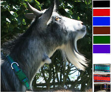 NEW! GOAT COLLAR with ADJUSTABLE SNAP FASTENING COLLAR in 9 COLOURS