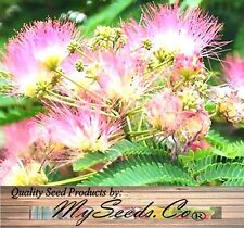 Mimosa Silk Tree Seed - Northern A. julibrissin Seeds - Persian silktree, Z. 6-9