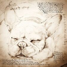French Bulldog (Sleeping): Wrapped Canvas Giclee Print. Da Vinci Style. 2 sizes