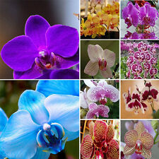 Mix Color Garden Phalaenopsis Flower Seeds Bonsai Plant Butterfly Orchid 20PCS