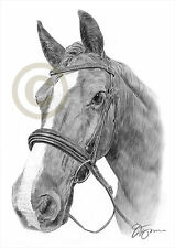 Stallion HORSE Pencil Drawing Print A3 / A4 sizes signed by artist Gary Tymon