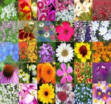 Wildflower Flower MIX Seeds - 30 Types Wildflower Mix 100% seed