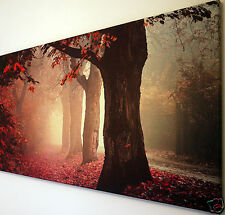 AUTUMN TREES RED LEAVES SCENE  CANVAS WALL ART PICTURE LARGE 18