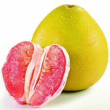 Pomelo 10,25,50Fresh tropical exotic Pomelo tree/plant/fruit seeds from Thailand