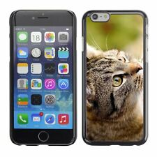 Hard Phone Case Cover Skin For Apple iPhone Common street cat looks up