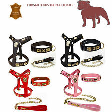 STAFFORDSHIRE BULL TERRIER LEATHER  DOG HARNESS COLLAR & LEAD SET BRASS KNOT