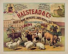Halstead Beef Packers 1886 Cattle Herd WALL DECOR PRINT POSTER