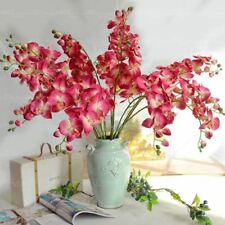100 pcs/bag orchid bonsai Butterfly phalaenopsis flower seeds balcony plant for