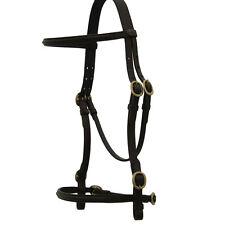HANSOME IN-HAND SHOW BRIDLE HORSE AND EQUESTRIAN