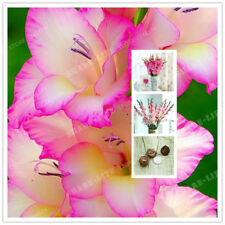Gladiolus Bulbs, Not Gladiolus Seeds, Flower Symbolizes Longevity, Pink Color