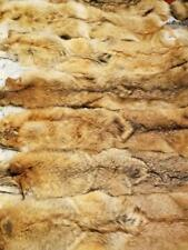 Coyote pelts tanned XL- XXXL size Northern fur from Adirondack Mountains