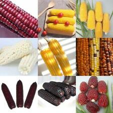 10 Particle Popcorn/Sweet/Pineapple/Strawberry Corn Seeds Vegetable E456