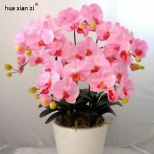 Pink Phalaenopsis Orchid Seeds Flower Seeds Indoor Bonsai Orchids 100 particles