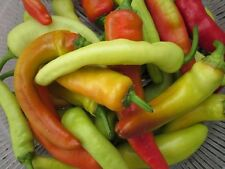 Hungarian Wax Hot Pepper -Very Colorful & Tasty!!!!  FREE SHIPPING!!!!!