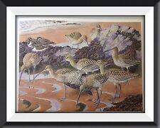 Curlews & Turnstones Beautiful Vintage Print By Tunnicliffe Can Be Framed -P2