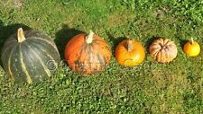 Squash & pumpkin seeds - 18 varieties, heirloom, organic and rare - cucurbita