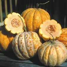Delice de Table Cantaloupe Seeds - French Heirloom Melon Seed (upto 10 gr)