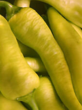 Hungarian Yellow Wax Peppers  - Beautiful,Large and TASTY!!!!! FREE Shipping!!!!